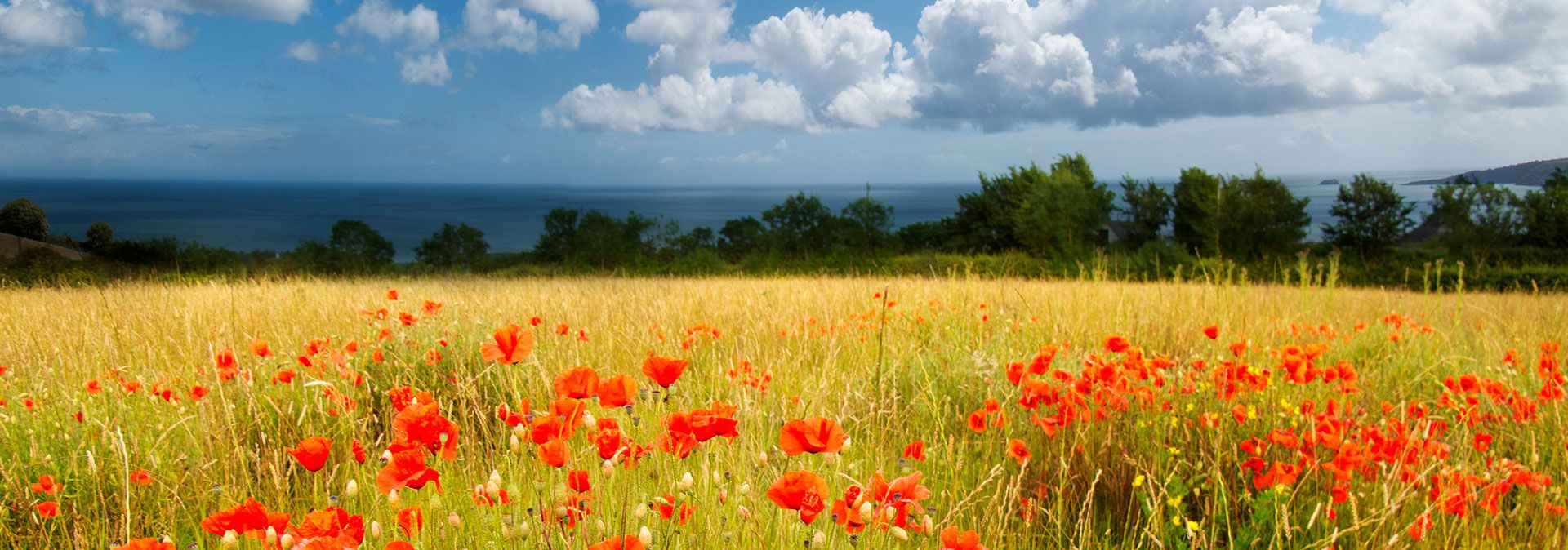 Devon in Bloom, Field of Poppies, Seaviews